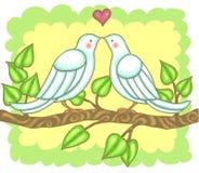 Quiera los pájaros Imagen de archivo libre de regalías