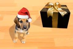 Quiero un perro de perrito para la Navidad Fotografía de archivo