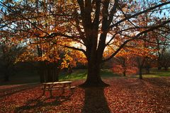 Quiet afternoon. Fall landscape with a tree blocking direct sunlight, creating long shadows. Bench in the foreground completes the scene royalty free stock photos