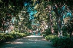 Quiet alley in St. Kilda Botanical Gardens. Stock Photos