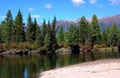 Quiet area of the mountain river. Royalty Free Stock Photography
