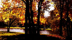 Quiet autumn afternoon in the park.Trees with golden leaves in October wind. stock video footage