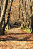 Quiet autumn alley Royalty Free Stock Image