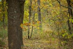 Quiet autumn forest scene Royalty Free Stock Photo