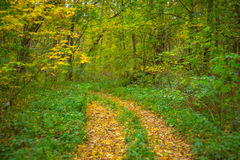 Quiet autumn forest scene Royalty Free Stock Image