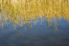 Quiet autumn lake Royalty Free Stock Photo