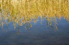 Quiet autumn lake Royalty Free Stock Photo