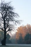 A quiet autumn morning. In the meadow Royalty Free Stock Photography