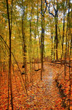 Quiet Autumn Trail. A small trail covered by colorful fallen leaves Royalty Free Stock Photo