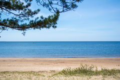 A quiet background of Baltic sea coast, pine branch and a sand shore on summer sunny day Stock Photography