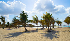 Quiet beach with palm trees shadows on the sand Royalty Free Stock Images