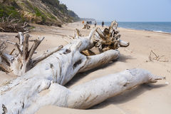 Quiet beach with thrown ashore bough of a tree. Royalty Free Stock Photos