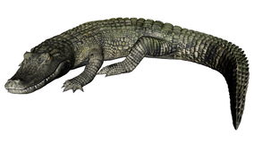 Quiet caiman - 3D render Royalty Free Stock Photos