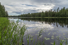 Quiet and calm lake and reflection of a forest Royalty Free Stock Image