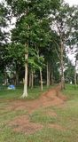Quiet camp site in the wood at Pompee view point Karnchanaburi Royalty Free Stock Photo