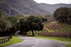 Windy Roads through Wine Country. Quiet country roads in Sonoma County, Northern California. This is a common scene with grapevines surrounding farmland stock photo