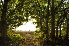 Quiet country view trees woodland. Quiet countryside field view woodland view Stock Photo
