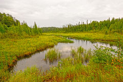 Quiet Creek in a North Woods Wetland Royalty Free Stock Images