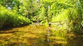 Quiet creek stock video