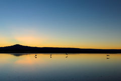 Quiet dawn. A beautiful sunset in the Chaxa Lagoon, in the Atacama's salt flat. In this place the beautiful flamingos nest royalty free stock photography