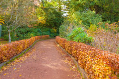 Quiet footpath in the gardens, autumn season Royalty Free Stock Image