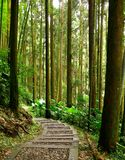 Quiet Forest Path Stock Photography