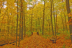 Quiet Forest Path in the Fall. In the Morton Arboretum in Illinois Stock Photography