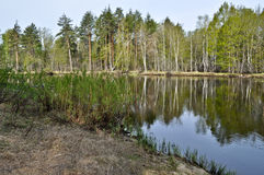 Quiet forest river in may. Stock Photos