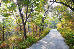 The quiet forest road _ autumnal scenery Stock Photography