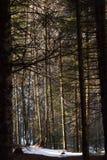 Quiet Forest Stock Photo