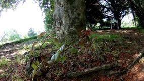 Quiet garden branch in the wind. Cat stock video