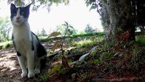 Quiet garden branch in the wind stock video footage