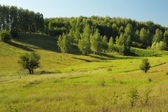 Quiet green summer hill slope with trees in the morning Royalty Free Stock Photography