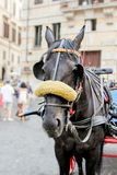 Quiet horse on a carriage in the streets of a city royalty free stock image