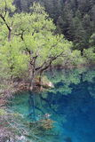 Quiet Lake. In jiuzhaigou valley scene Stock Photography