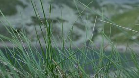 Quiet lake stock video footage