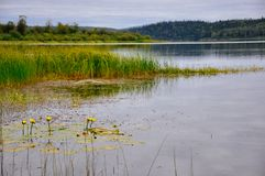 A quiet lake in Northern British Columbia. An image of a quiet lake in Northern British Columbia royalty free stock image