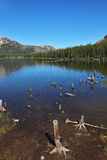 A quiet lake, surrounded by forest and dry stumps Stock Images