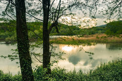 Quiet Lake and Vegetation at Sunset Royalty Free Stock Images