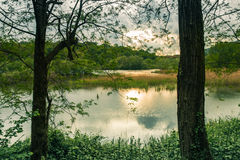 Quiet Lake and Vegetation at Sunset Royalty Free Stock Photo