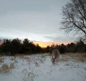 Quiet morning. Royalty Free Stock Photo