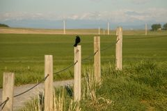 Quiet morning in countryside of Southern Alberta, Canada. Birds sound in field royalty free stock photography