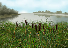 A quiet morning on the lake. Landscape with lake, forest, reeds Royalty Free Stock Photos