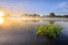 Quiet morning. At the lake with the sun at the side on the way up Royalty Free Stock Photos