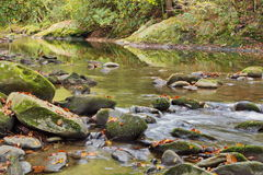 fall morning by smoky mountain river Stock Photo