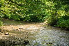 Quiet mountain river in summer Royalty Free Stock Photography
