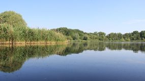 Quiet Natural Lake During Spring And Summer With Clump Of Reeds. Quiet Pure Natural Marsh During Spring And Summer  With Reflection And Green Leaves In Germany Royalty Free Stock Photos