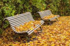 Quiet park in autumn Royalty Free Stock Images