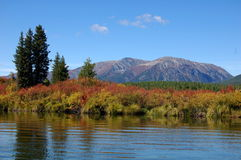 Quiet part of the mountain river. Royalty Free Stock Images