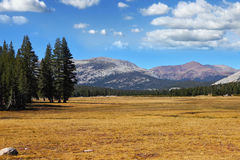 A quiet part of Yosemite Park Royalty Free Stock Photo